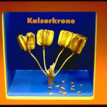 Kaiserkrone_4EB47F94717143F5